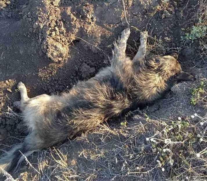 По факту жестокого обращения с животными открыли дело / фото Animal SOS Odessa