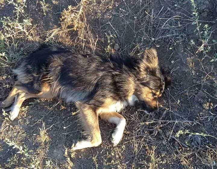 Волонтеры утверждают, что собак застрелил местный депутат / фото Animal SOS Odessa