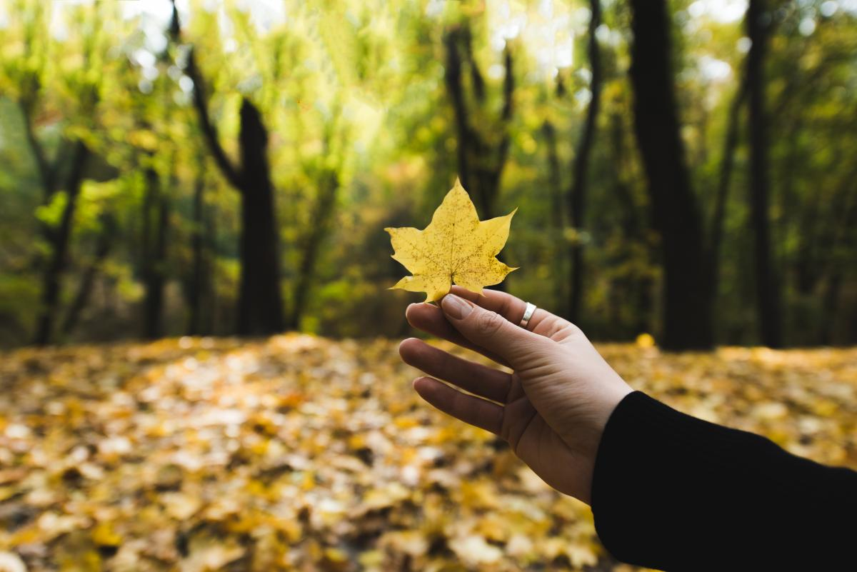 Сьогодні - День осінніх міражів / фото ua.depositphotos.com
