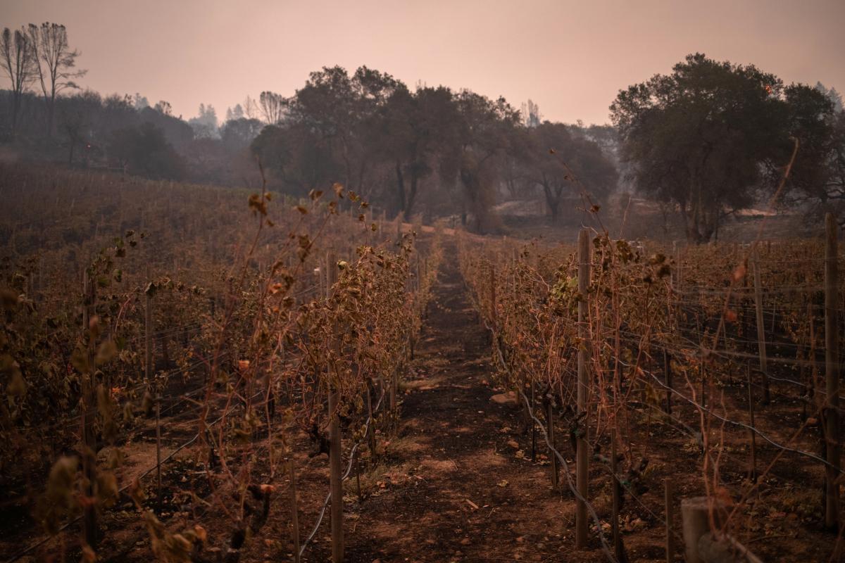 Часть пожаров ликвидировали / REUTERS