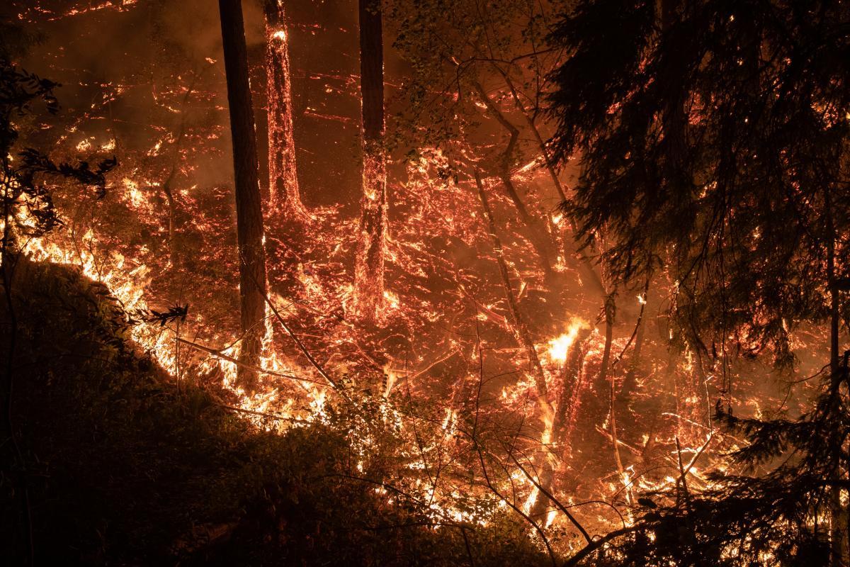 Луганщину охватили масштабные пожары / REUTERS