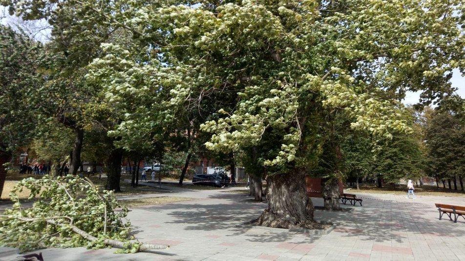 Ураган у Харкові повалив гілки дерев / фото Суспільне