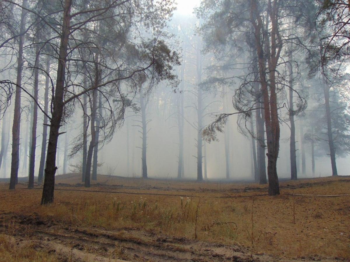Жертв и пострадавших от лесного пожара на Луганщине нет / фото ГСЧС