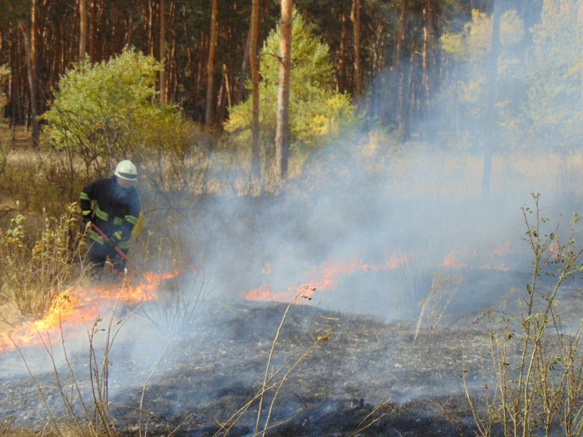 Лесные пожары на Луганщине укрощают почти 200 человек / фото ГСЧС