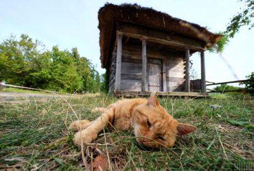 Погода на вихідні: в Україну повернеться літня спека до +30°