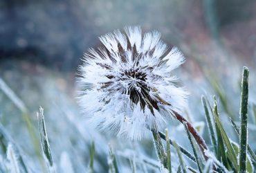В Украину ворвалось похолодание: какие области накроют заморозки