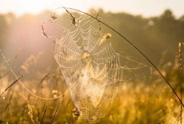 Синоптики дали прогноз погоды на осень в Украине