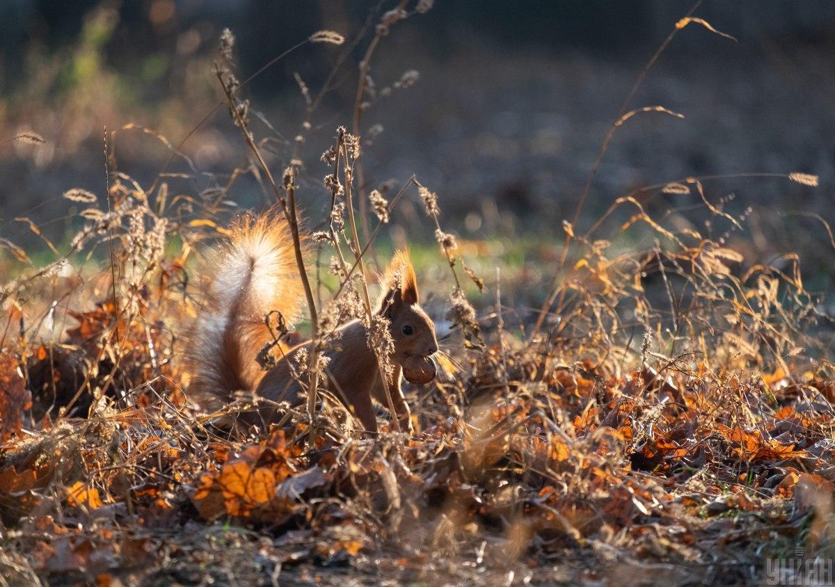Температура в октябре будет держаться в пределах климатической нормы / фото УНИАН