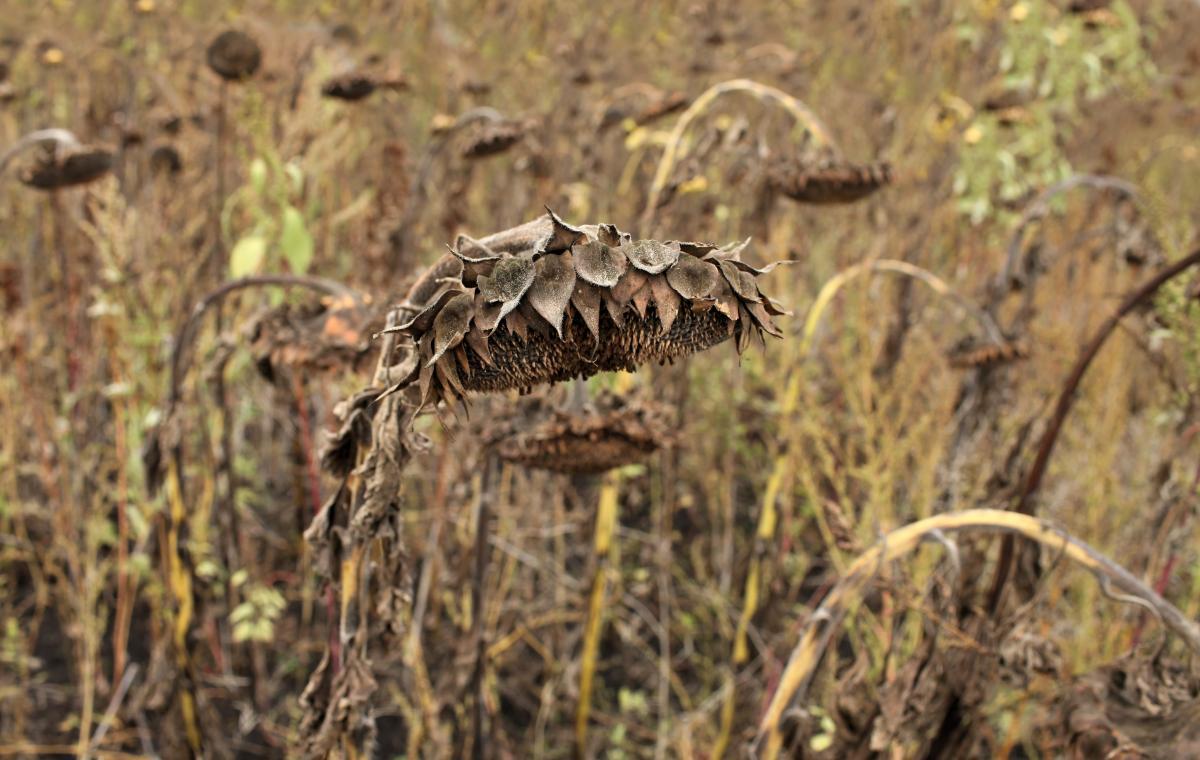 Синоптик прогнозирует засуху на востоке страны / Фото ua.depositphotos.com