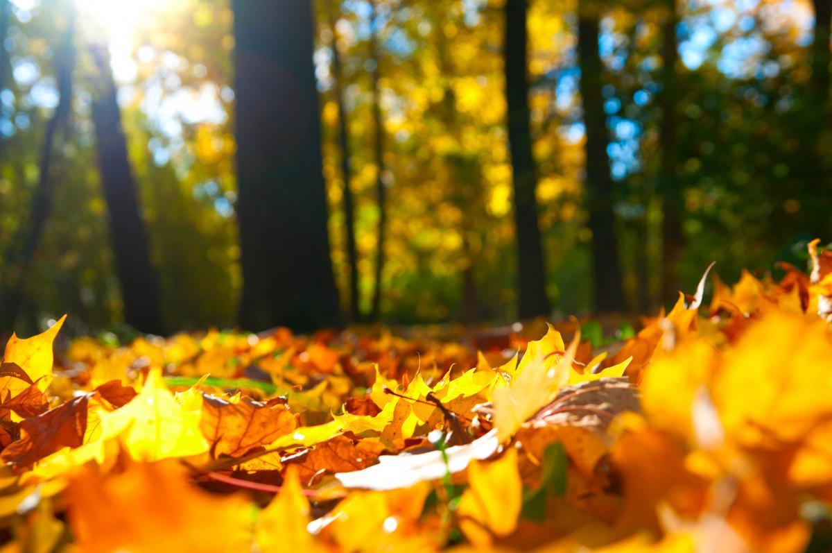 11 октября народный праздник / фото ua.depositphotos.com