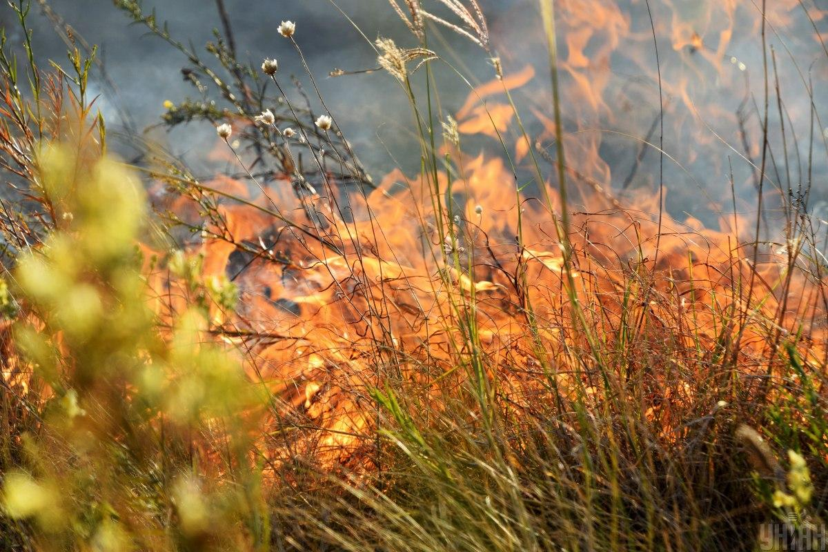 Ілюстрація: пожежа в степу / фото УНІАН