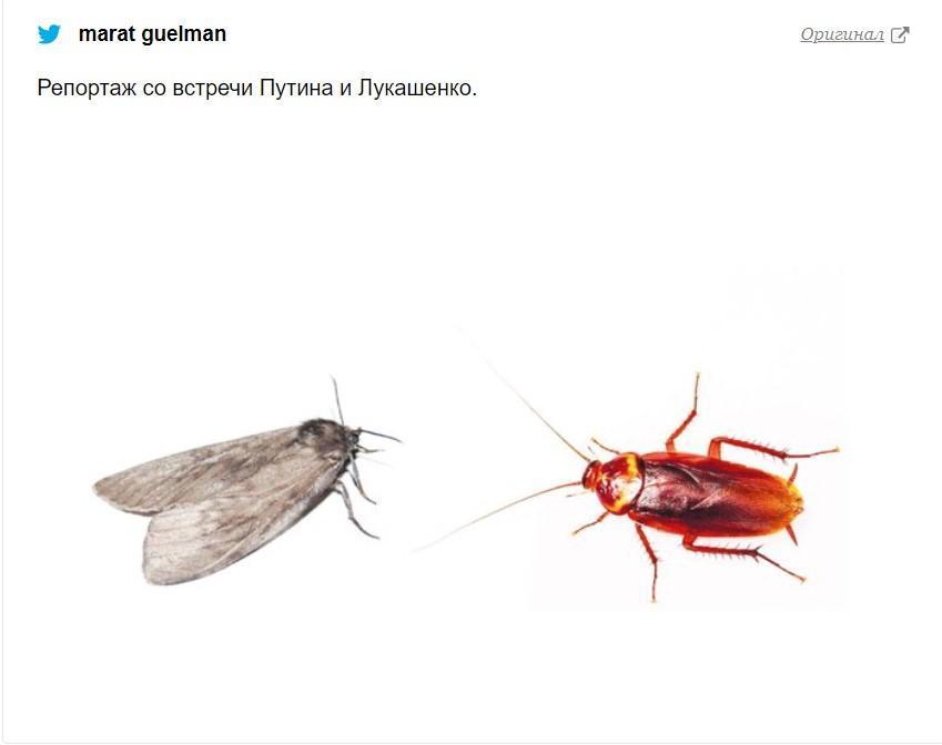 Мемы о Путине / фото marat guelman