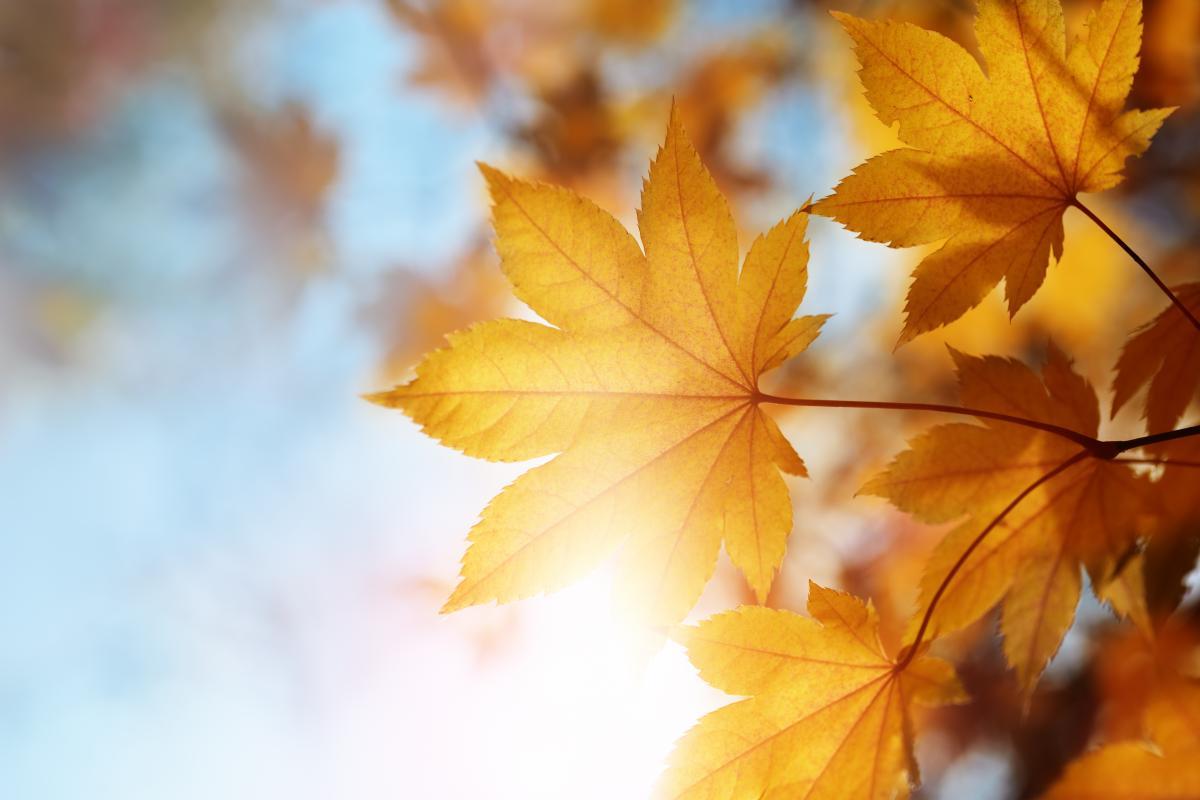 Вересень виявився найтеплішим за всю історію спостережень / Фото ua.depositphotos.com