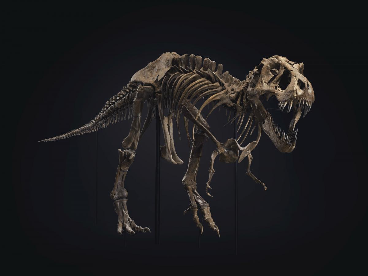 Скелет тираннозавра Стэна продали на аукционе / фото twitter.com/ChristiesInc