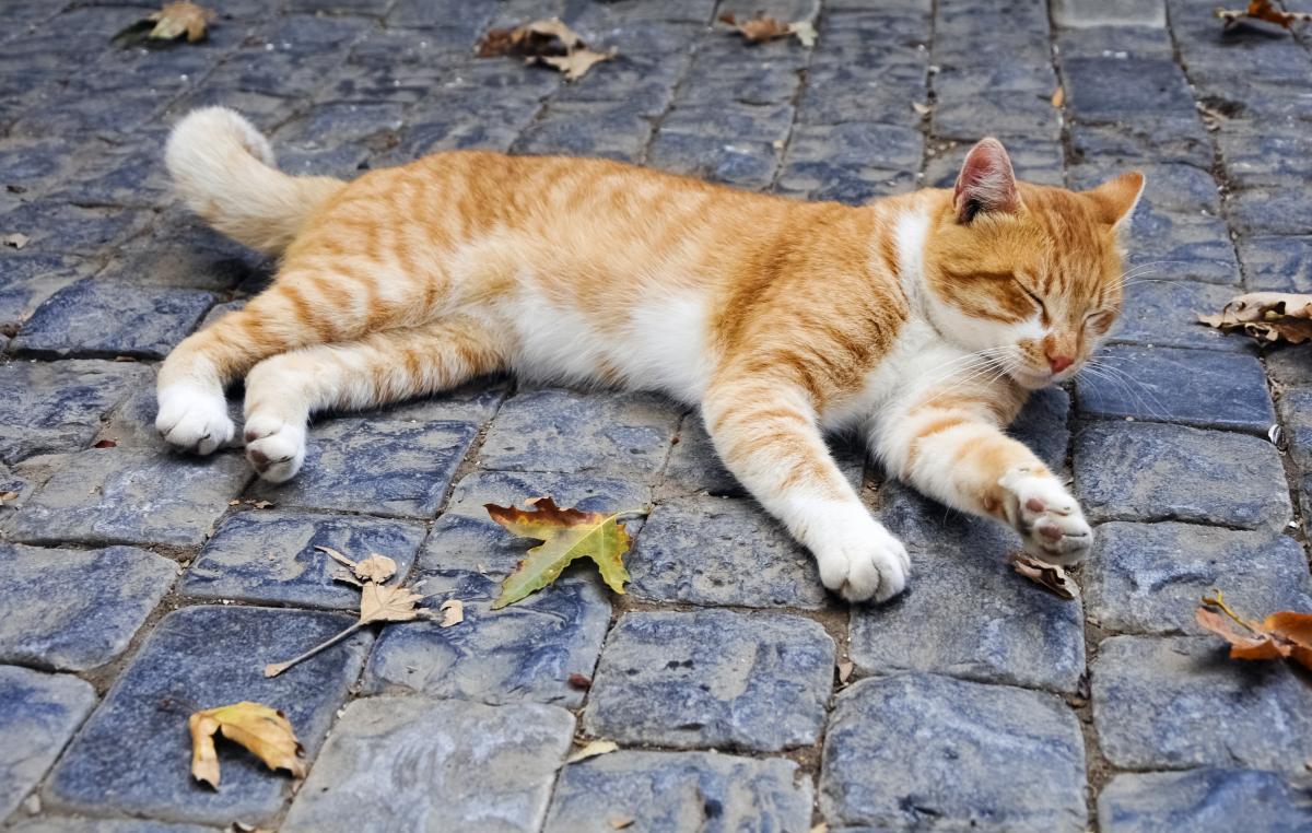 4 березня - День апельсинових котів / фото ua.depositphotos.com