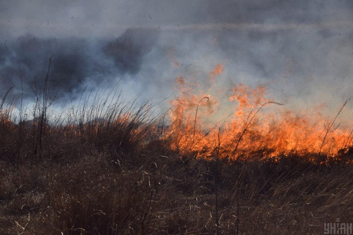 Иллюстрация: пожар в степи / фото УНИАН