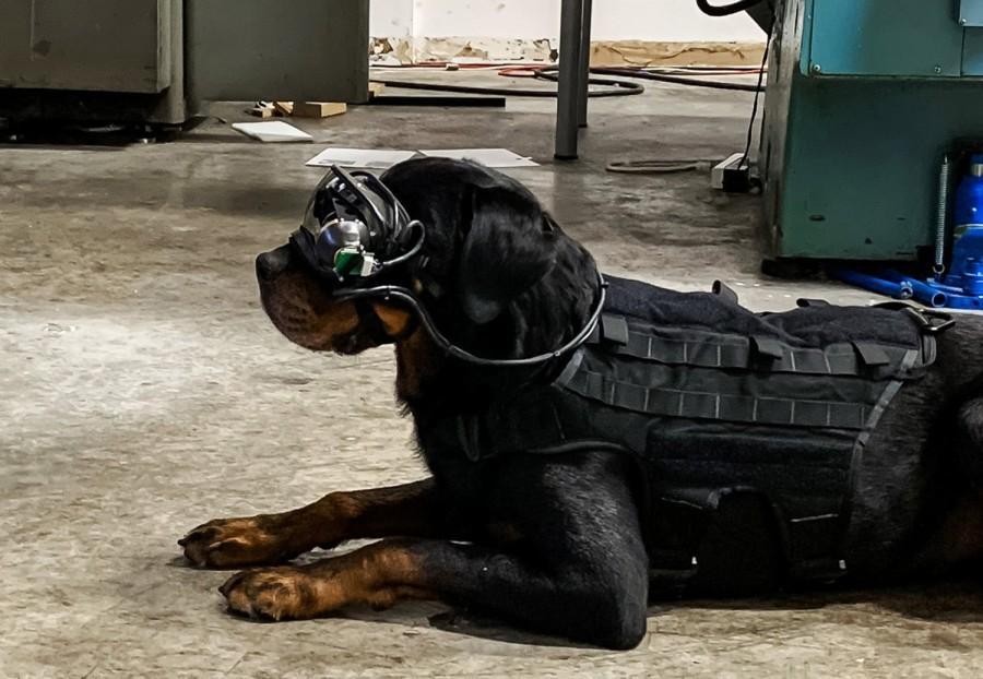 Армейским собакам предоставят AR-очки / COMMAND SIGHT, INC.