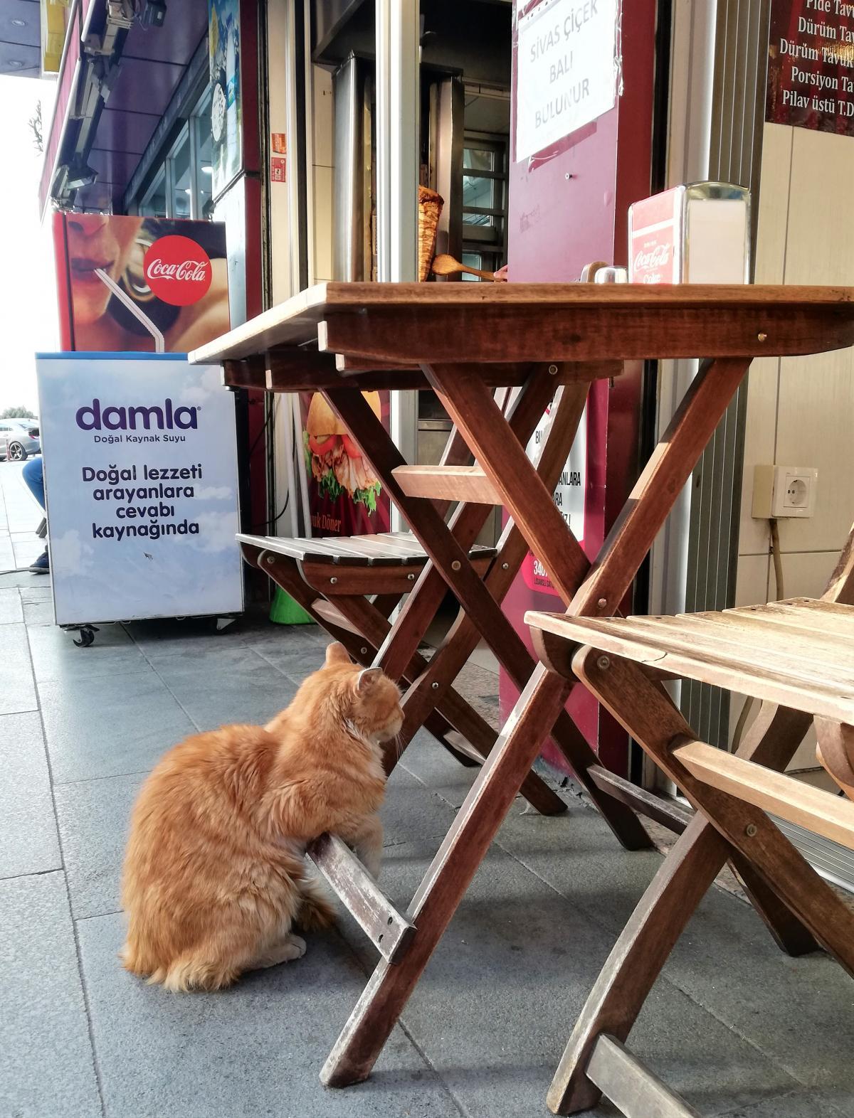 Коты в Стамбуле везде / фото Марина Григоренко