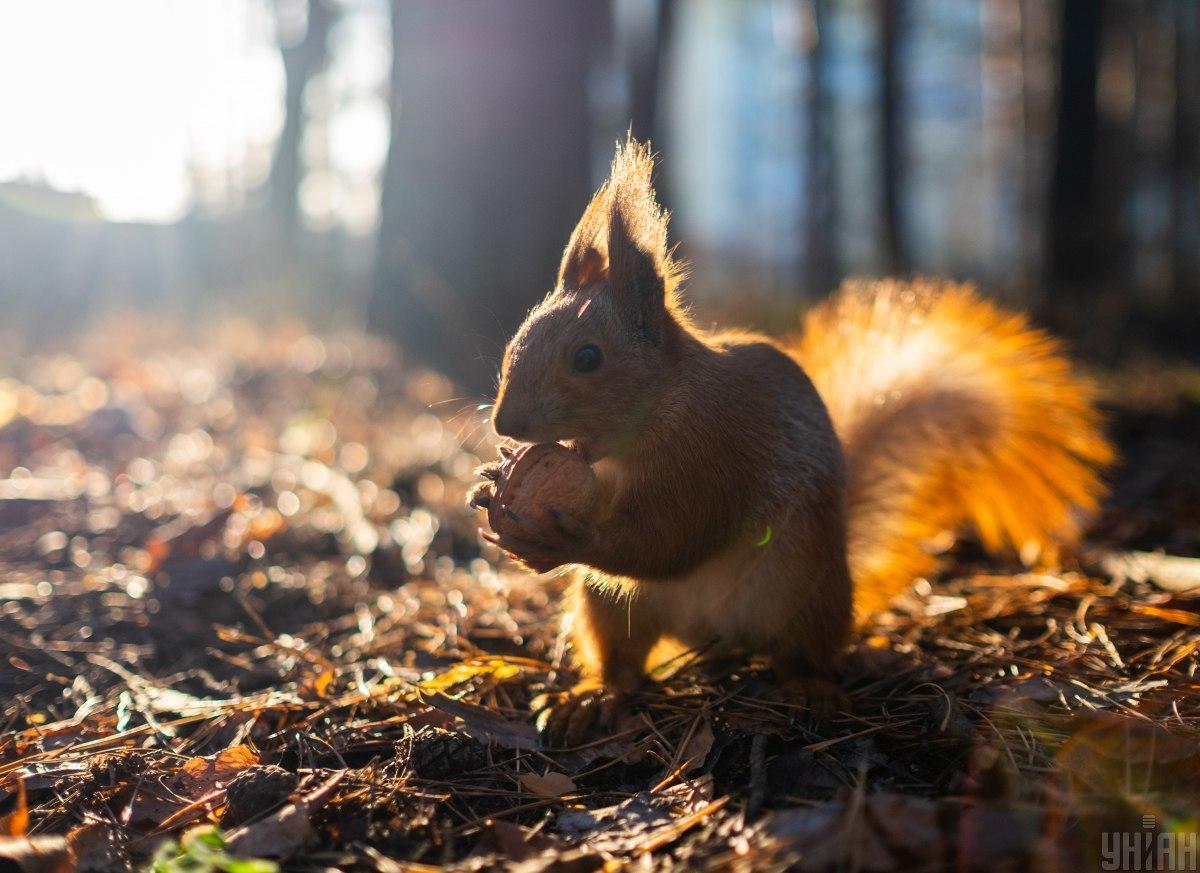 Осеннее тепло постепенно идет на спад / фото УНИАН