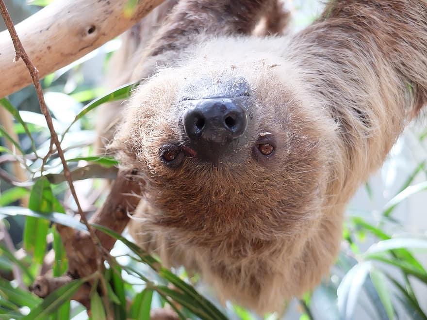 Сьогодні - Міжнародний день лінивця / фото pikist.com