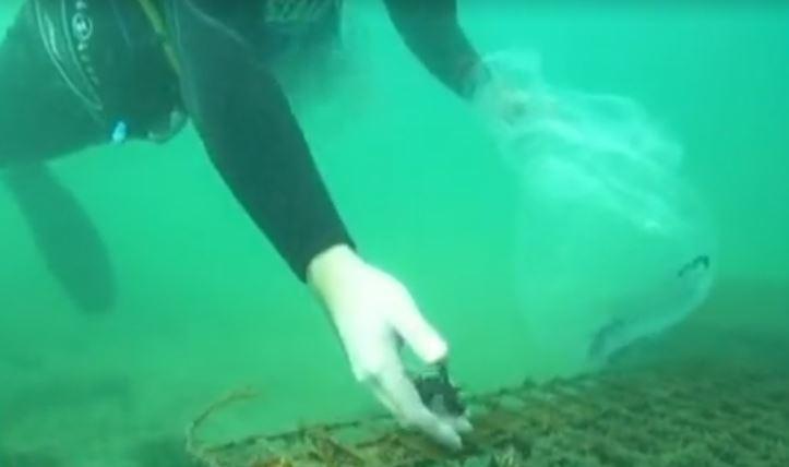 У австралийского побережья сделали отель для морских коньков / скриншот