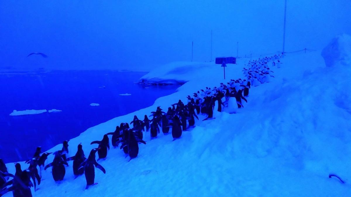 Ученые отсняли длинные очереди пингвинов за морепродуктами - фото дня / facebook.com/anna.soina