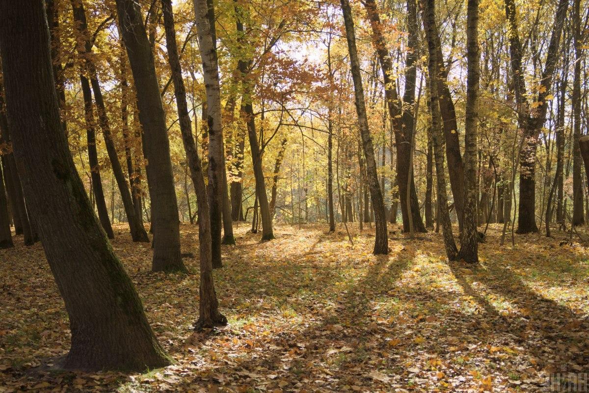 В Украине планируют обновить законодательство для защиты самосейных лесов / фото УНИАН