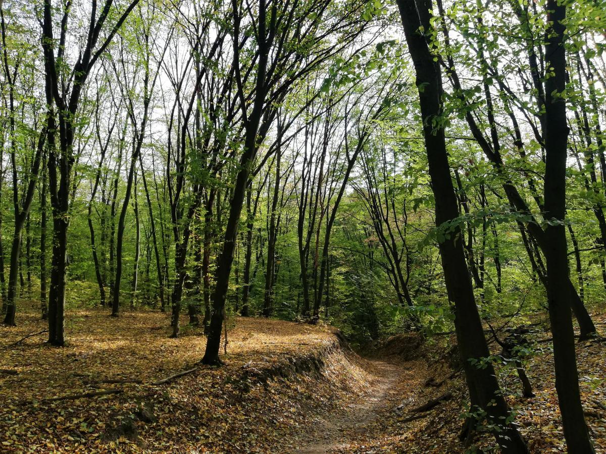 Голосеевский лес - это огромное количество пеших маршрутов на природе / фото Марина Григоренко