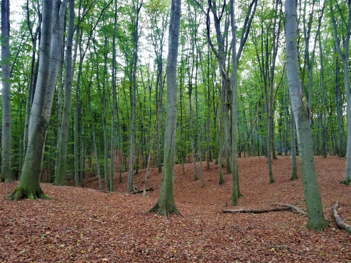 В Голосеевском лесу немало скрытых тропинок, где нет толп отдыхающих / фото Марина Григоренко