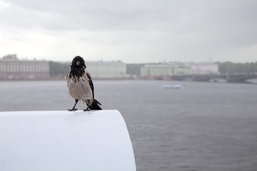 В своем стихотворении Шнуров вспомнил Родиона Раскольникова, который зарубил старуху в книге Достоевского/ фото pikist.com