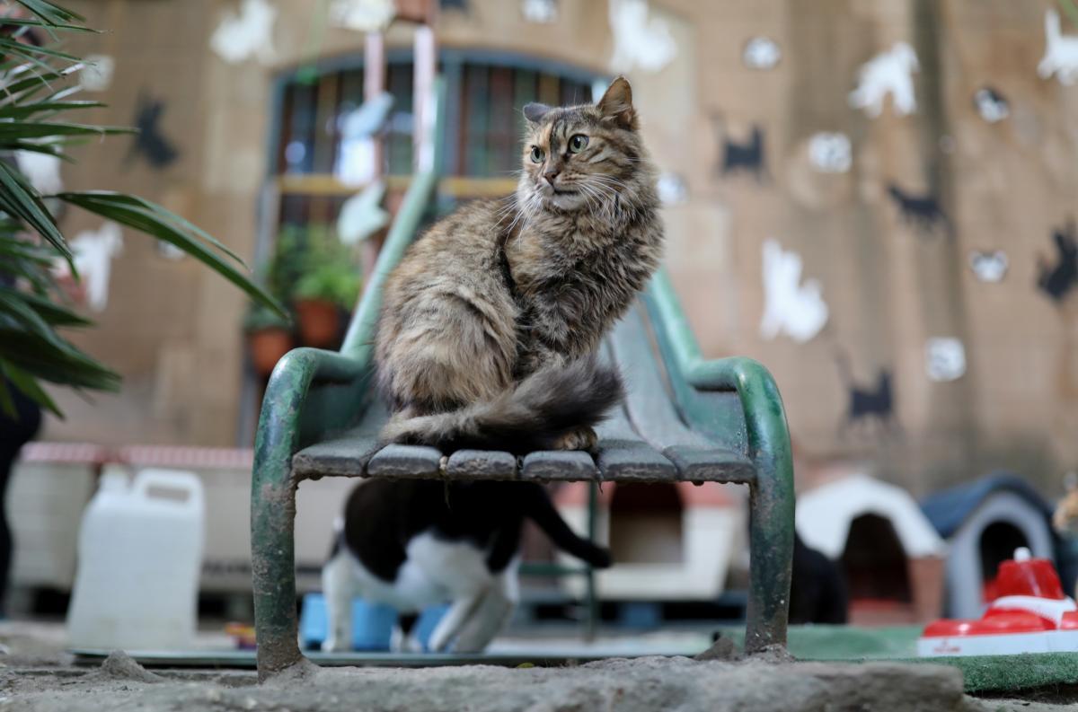 Кішки віддавали перевагу оптичній ілюзії квадрата \ фото REUTERS