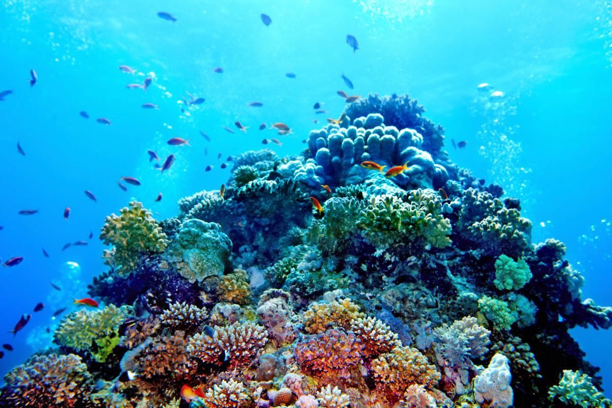 Новый риф достигает полутора километров в ширину и 500 метров в высоту / фото ua.depositphotos.com