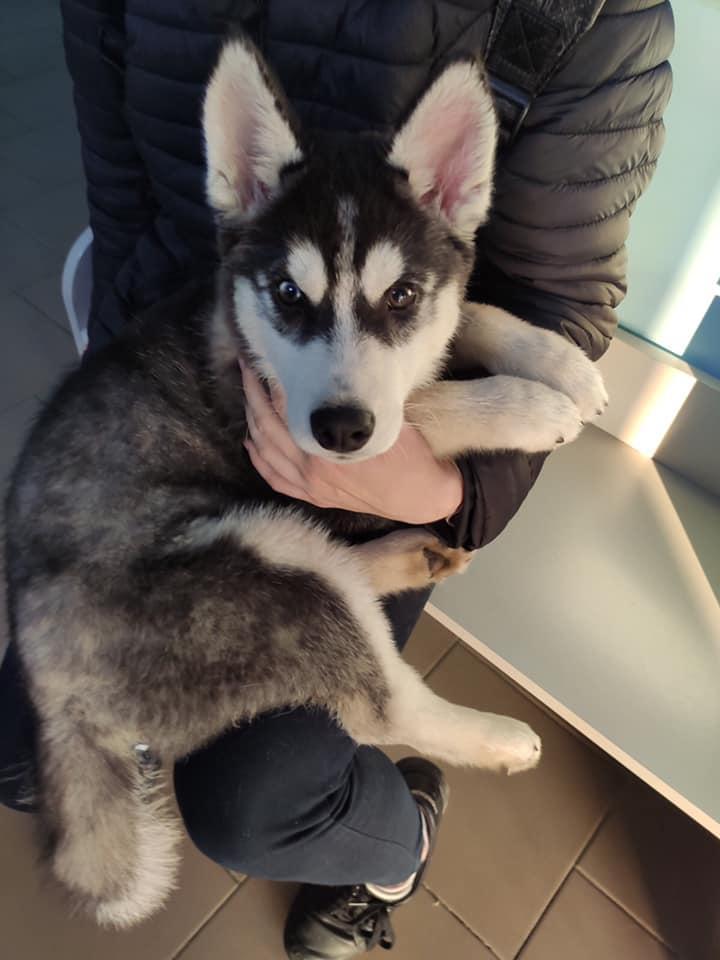 Нині собакою опікуються волонтери / фото Animal help ZT - Допомога тваринам м.Житомир