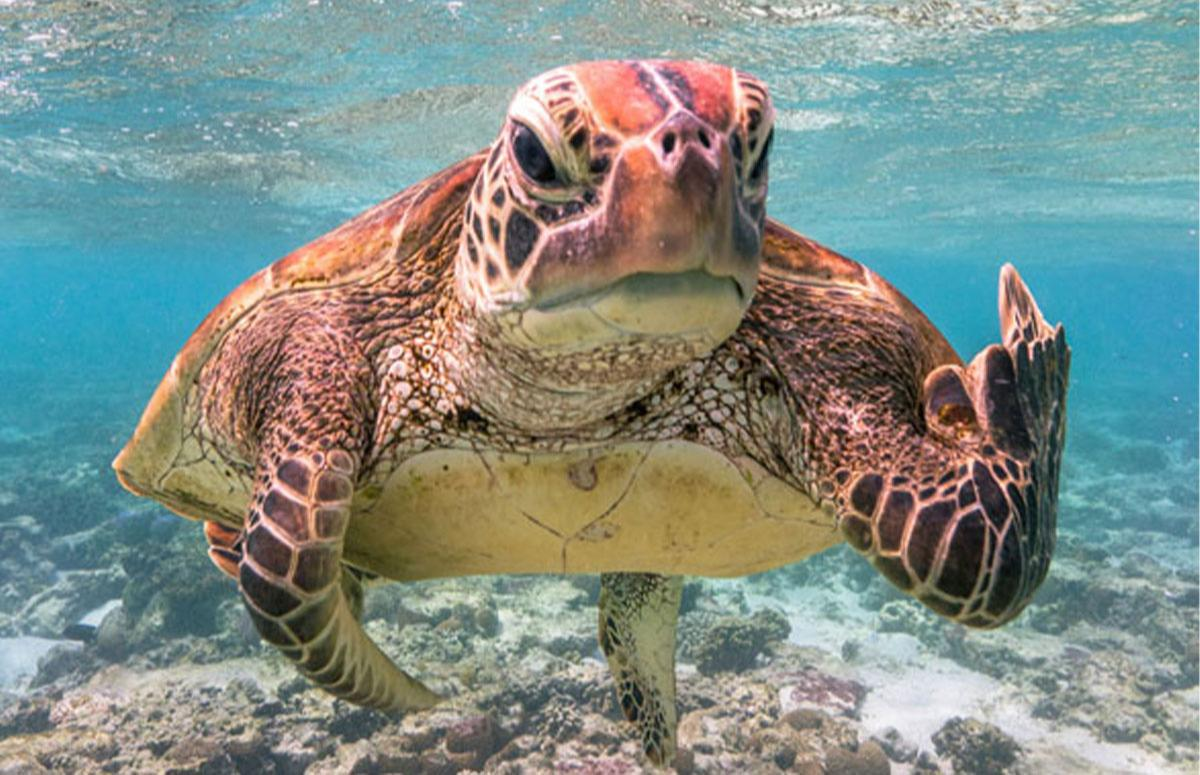 Найсмішніше фото дикої природи 2020 року / фото instagram.com/comedywildlifephotо