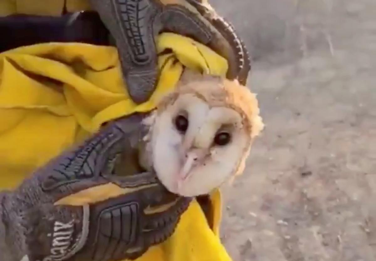 Пожежники врятували сову / фото REUTERS