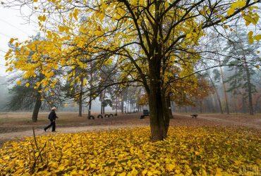 Синоптики: бабье лето покинет Украину уже на выходных (видео)