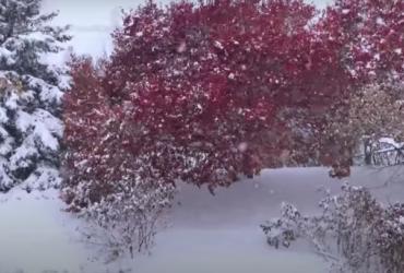 На север США обрушилась зимняя буря, выпало рекордное количество снега (видео)