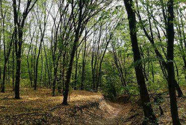 Справжній ліс посеред міста: ізолюємося в Голосіївському лісі в будь-яку пору року