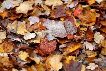 Сьогодні на киян чекає похмурий осінній день з температурою не вище +6°