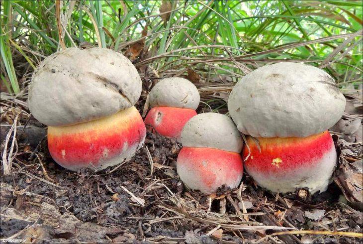 Мать девочки также отравилась грибами / фото zelenyjmir.ru