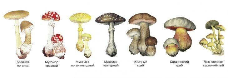 Основные ядовитые грибы Украины / фото zelenyjmir.ru