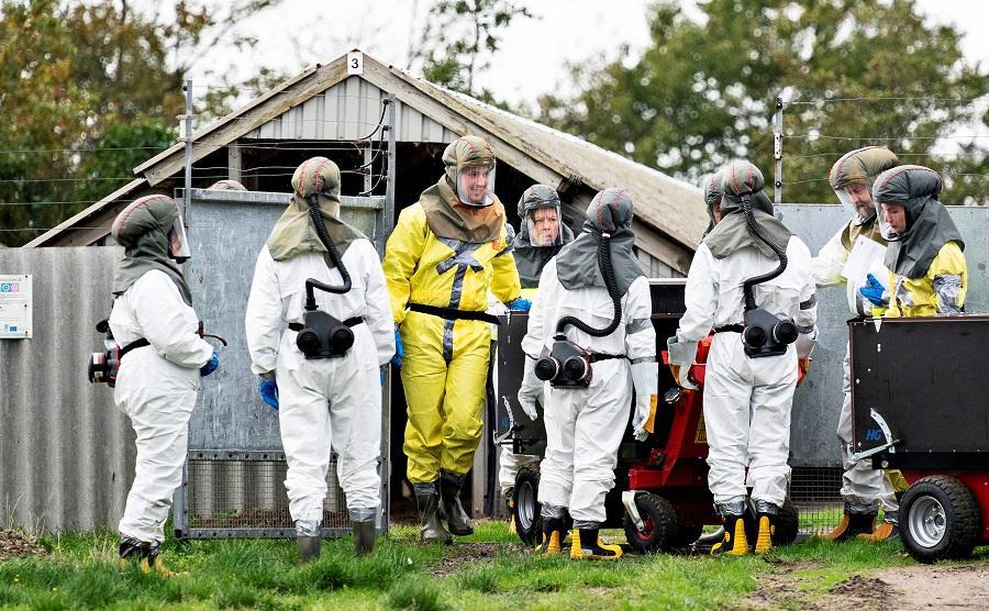 В Дании начали уничтожать норок \ фото REUTERS