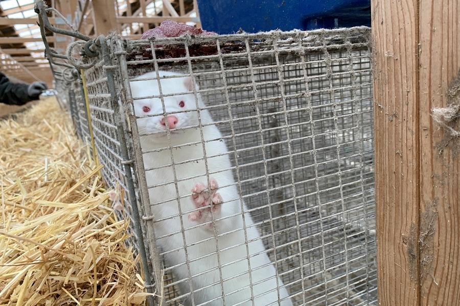 Фермерам должны будут выплатить компенсации за животных / фото REUTERS