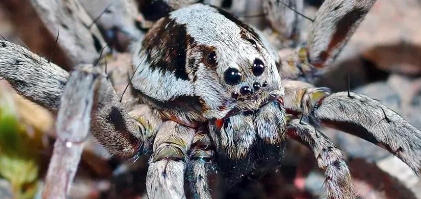 У взрослых особей тело пушистое, серо-коричневого окраса / Surrey Wildlife Trust