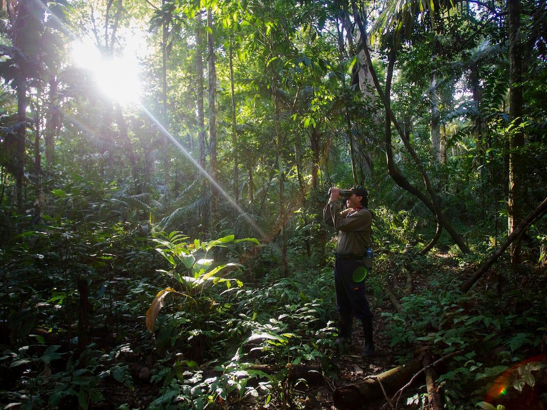 В лесах Амазонии гибнут деревья / Фото REUTERS