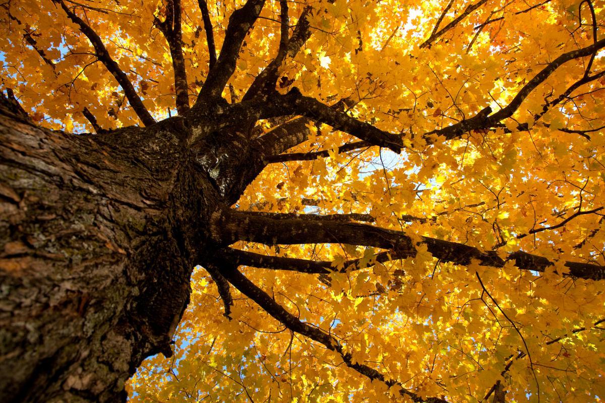 Прикмети погоди 10 вересня / Фото ua.depositphotos.com