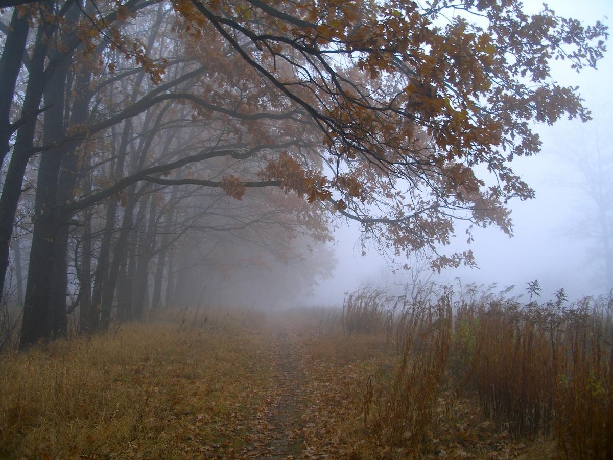 Завтра в Украине ожидаются туманы / Фото ua.depositphotos.com