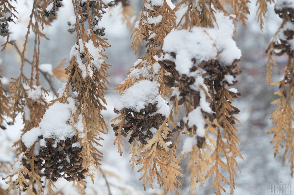 Иллюстрация: в Украине выпал первый снег / фото УНИАН