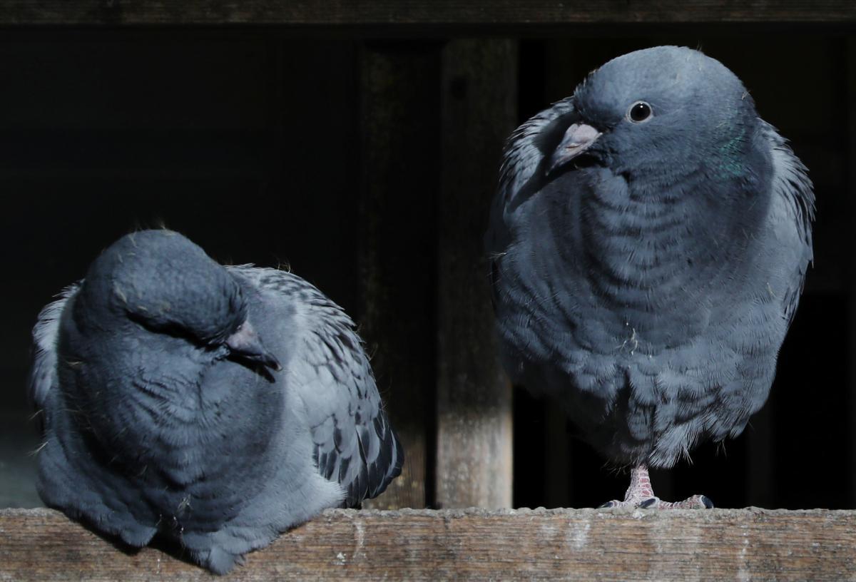 Птицы теснились в пластиковых контейнерах без воды и еды / фото REUTERS