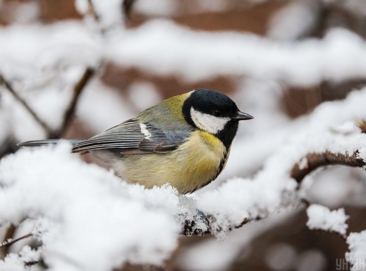 """На этой неделе в Украине ожидается снег и дневной """"минус"""" / фото УНИАН"""